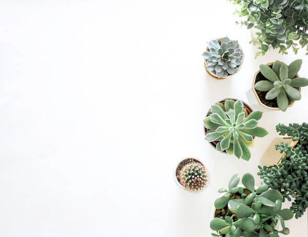 badkamer plantjes
